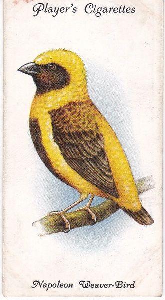 No. 38 Napoleon Weaver-Bird