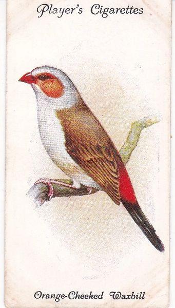 No. 39 Orange-Cheeked Waxbill
