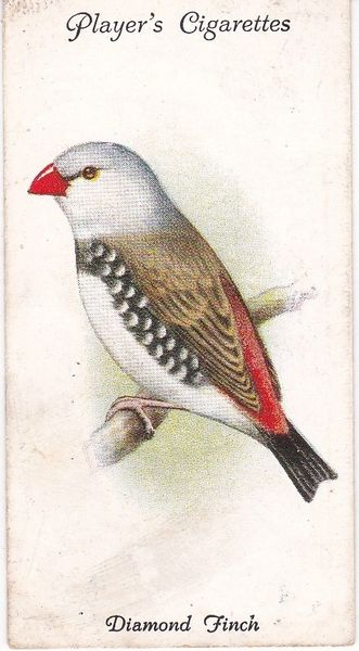 No. 49 Diamond Finch