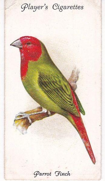 No. 50 Parrot Finch