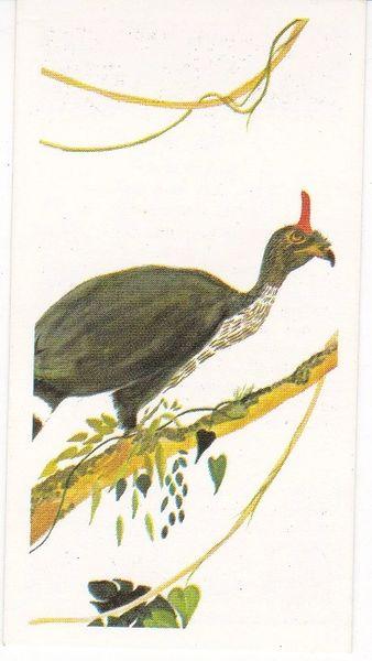 No. 30 Horned Guan