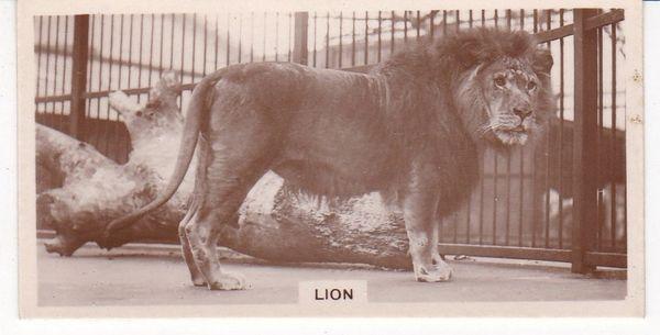 No. 32 Lion