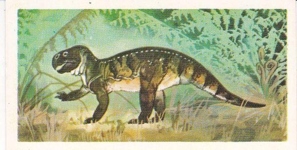 No. 24 Psittacosaurus