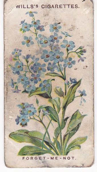 First Series No. 13 Forget-Me-Not