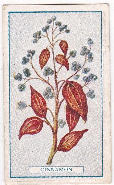 No. 62 Cinnamon