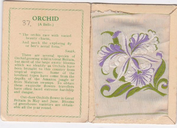 No. 37 Orchid