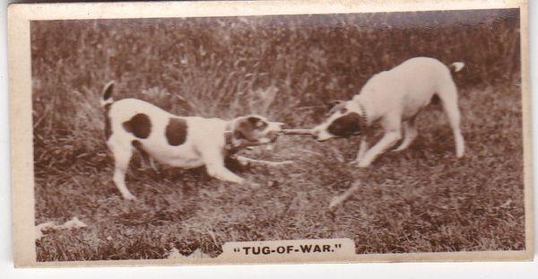 No. 02 Tug of War