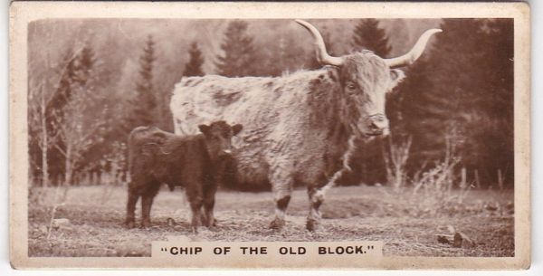 No. 03 - CHIP OF THE OLD BLOCK