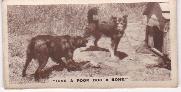 No. 04 Give a Poor Dog a Bone
