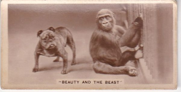 No. 15 Beauty and the Beast (5th series) 1933