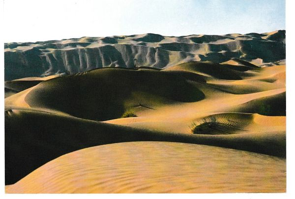 Post Card Africa Tunisia Sahara de Douz
