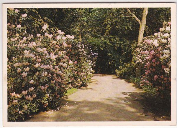 Post Card United States New York Long Island Bavard Cutting Arboretum