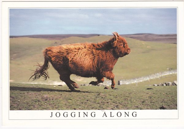 Postcard Animals Jogging Along Young Highlander on the Move Stirling Gallery