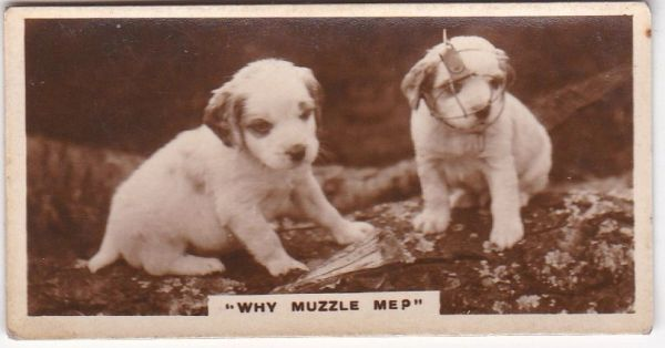 No. 21 Why Muzzle Me?