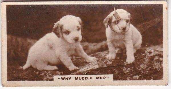No. 21 Why Muzzle Me?