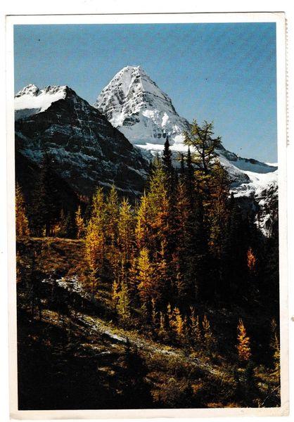 Postcard Canada Alberta Mount Assiniboine