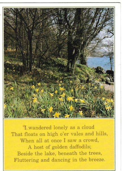 Postcard flowers / poetry Wordsworth's Daffodils