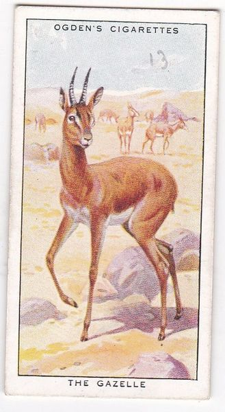 No. 10 Concealing Colours for Protection ANIMALS (B) The Gazelle