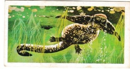 Trade Cards Brooke Bond PREHISTORIC ANIMALS No. 05 Diplocaulus