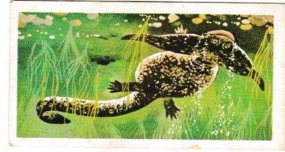 Trade Cards Brooke Bond PREHISTORIC ANIMALS No. 05 Diplocaulus