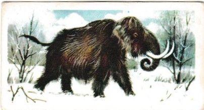 No. 46 Mammuthus