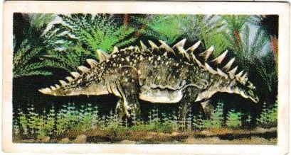 No. 19 Stegosaurus