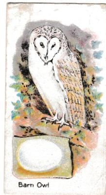 Trade Card Magical Soap British Birds & Their Eggs No.24 The Barn Owl