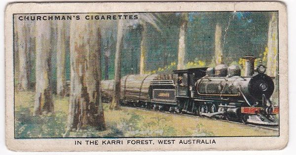 No. 47 In the Karri Forest, W Australia