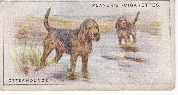 No. 20 Otterhounds