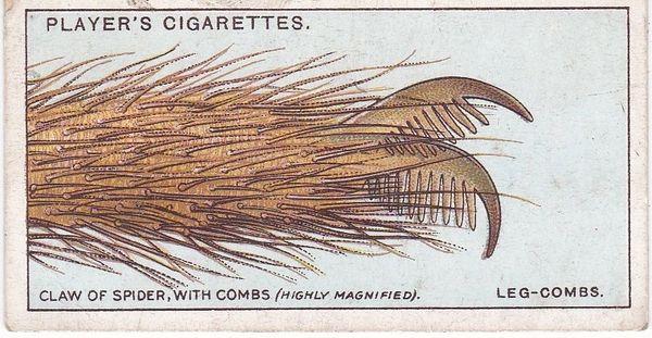 No. 24 Leg-Combs