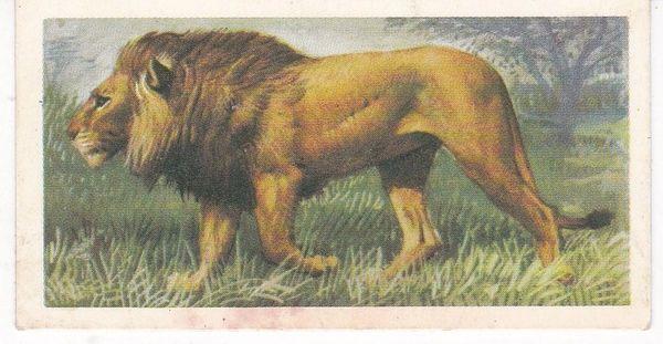 No. 10 - Lion