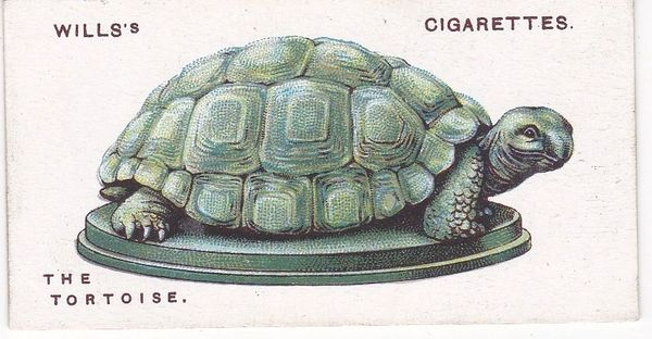 No. 44 The Tortoise