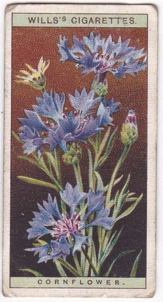A Series No. 05 Cornflower