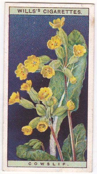 A Series No. 06 Cowslip