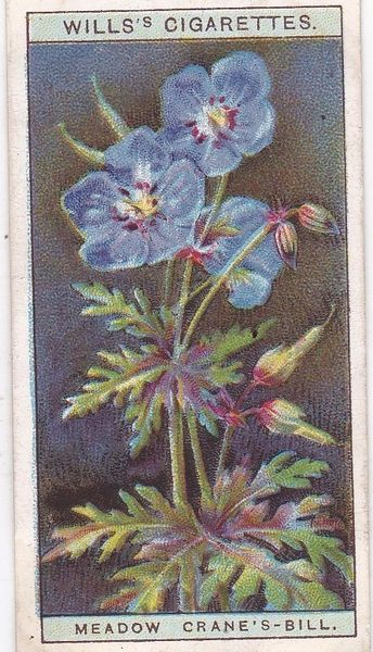 A Series No. 07 Meadow Crane's Bill