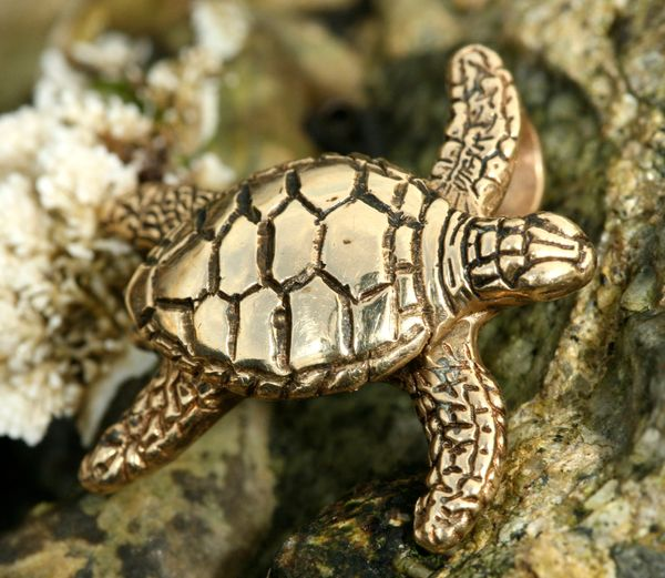 Sea Turtle Collection. Featured is our Large 14K Gold Sea Turtle with added Tahitian Mabe Pearl as body. Click here to see all the different styles and prices we offer.
