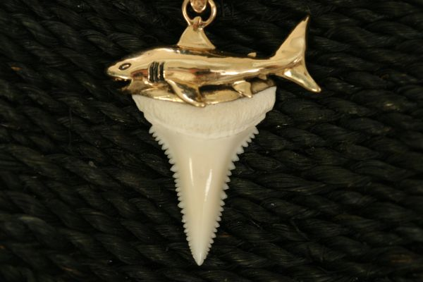 Great White Shark Tooth with Straight Shark - Small