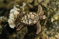 Sea Turtle in 14K Gold - Large