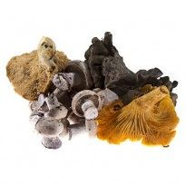 Black Truffle for sale one Ounce