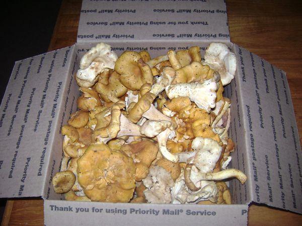 Chanterelle Mushrooms for sale