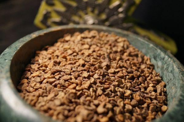 Datura Metel Devils Trumpet 20 Seeds