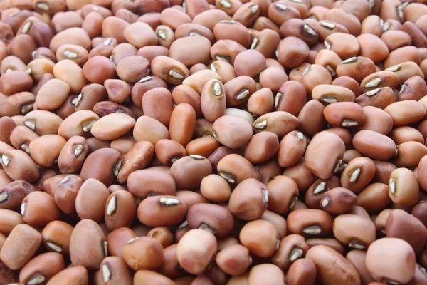 Provider Bush Green Bean | The Naked Seed Company