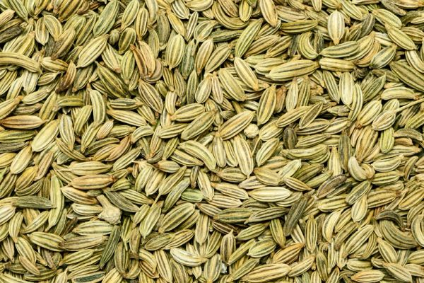 Perfection Fennel OG | The Naked Seed Company