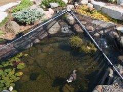 Pond Net Fish Protection Pyramid Guard Grid Cats Heron