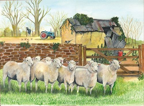 CURIOS SHEEP CARD ....by Sue Podbery