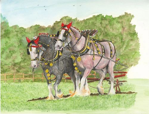 A PAIR OF WORKING SHIRE HORSES