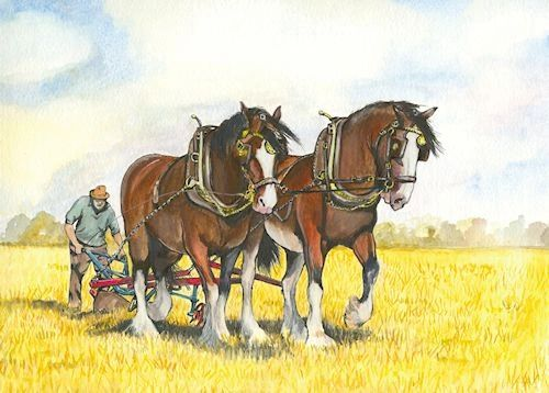 A PAIR OF BAY SHIRES PLOUGHING ON STUBBLE By Sue Podbery