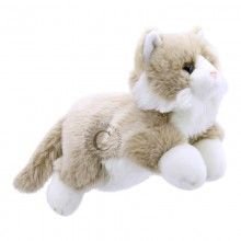 Cat - Beige & White - Full-Bodied