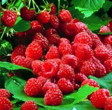 21 Raspberry Medium Gel