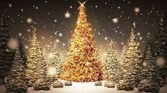 25 Christmas Tree Dram Oil